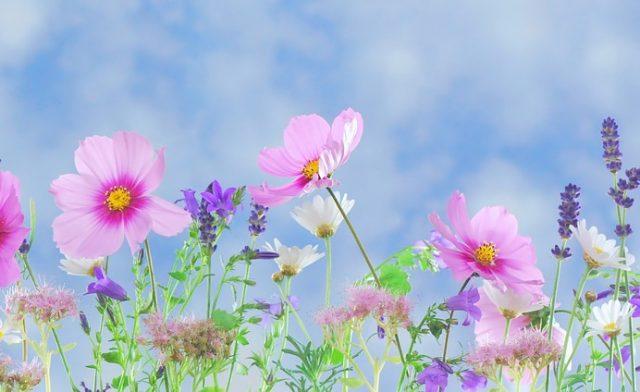 Blumenpflanzen bei ARANEA